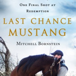 last-chance-mustang