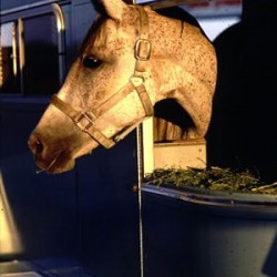 A third of Australian owners report transport-related horse problems