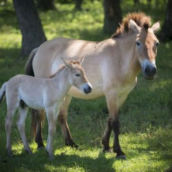 US zoo welcomes five rare newborn foals