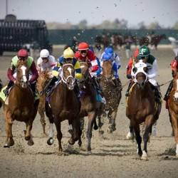 """Bleeders"" focus of new racehorse research"
