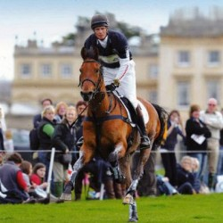 William Fox-Pitt's Tamarillo dies at 23