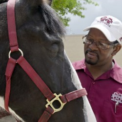 Specialists pioneer new equine eye-removal method