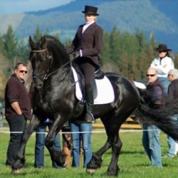 NZ friesian movie horse Wabe dies at 24