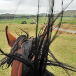 Yes, hot and windy weather can make your horse cranky