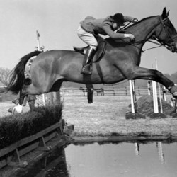 Showjumping's 'glamour girl' Dawn Palethorpe Wofford dies at 79