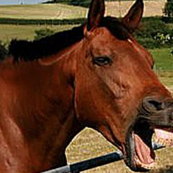 Horses shown to have a rich range of facial expressions