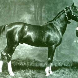 President puts $5.5m into Azerbaijan's equine heritage