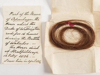 Copenhagen's mane hair sells for £2600