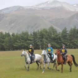 Researchers explore training of top-level NZ endurance horses