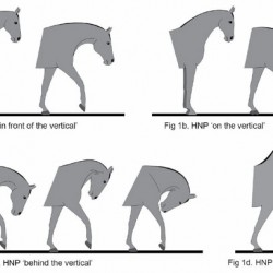 Hyperflexion gets the thumbs down from equitation scientists