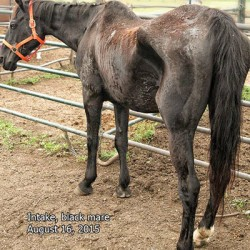 Six horses taken into care in Wisconsin