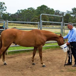 Building a horse's trust: There is a catch