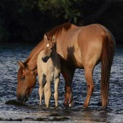Advocates rally over threat to Arizona's famous Salt River horses