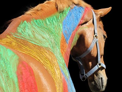Equine sports massage diploma course offered in NZ