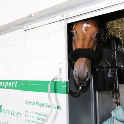 Date with destiny: Hello Sanctos jets off to Canada