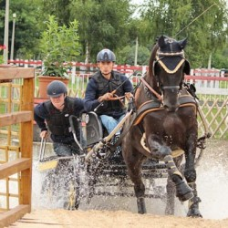 Young driving horses strut their stuff in Hungary