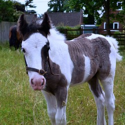 New academic life for rescued mum and foal