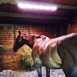 Seeing the light: Racehorses thrive on LED therapy