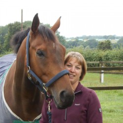Repurposed racehorse first to find new home in pilot scheme