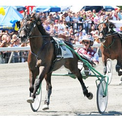Harness horse racing tracks join anti-doping movement