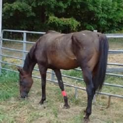 Saved: Lucky break for retired racehorses