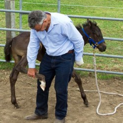Young horse training: Get it right from the get-go