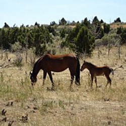 Lawsuit challenges federal plans to round-up mustangs in Colorado