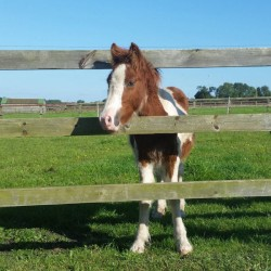 Huckleberry rescued under Britain's new horse legislation
