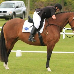 Major horse-gear theft in Rotorua includes para-equestrian tack