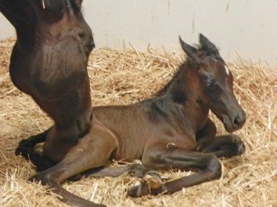 Against the odds: 'Miracle' IVF foal born in US