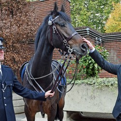 Award for man who saved police horse from dog attack