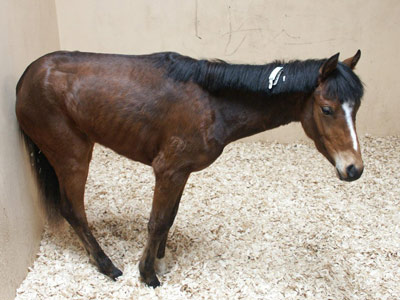 Equine grass sickness shares signs of conditions such as Alzheimer's