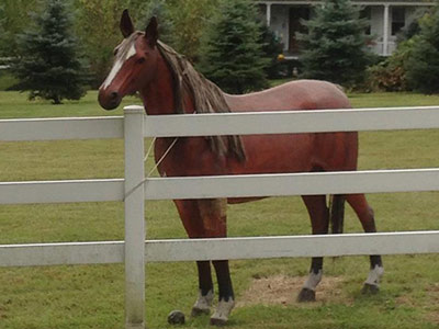 SPCA probe: Another 'model' horse owner found