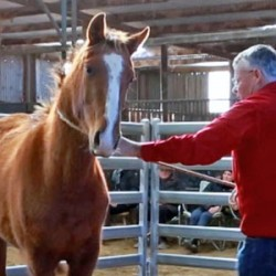 The lightest touch: Pressure and relief in horse training