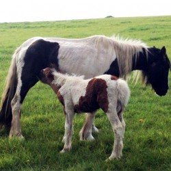 Mare and foal taken in by British charity