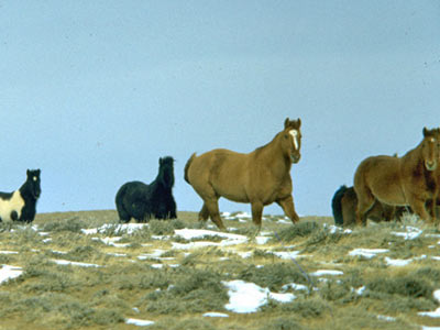 "Proposed massive wild horse muster in Wyoming called a ""budget buster"""