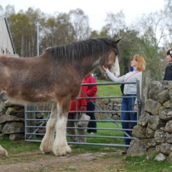 A big star: 19hh Digger takes on TV ad lead role