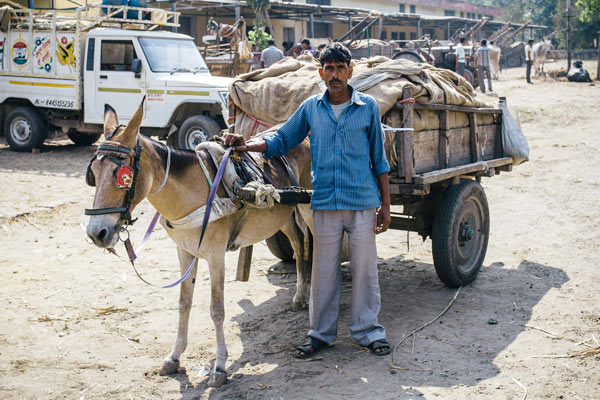 Kawar Pal, 35, relies on the money generated by his mule to support his family. Photo: The Brooke