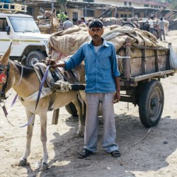 "Working horses the ""overlooked powerhouses"" of developing world"