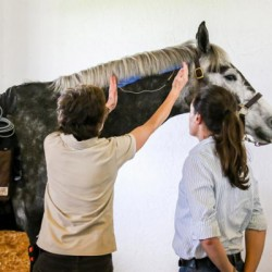 Study shows benefits of Functional Electrical Stimulation (FES) to horses