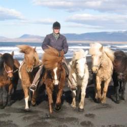 Equine tourism could be saviour for rare breeds