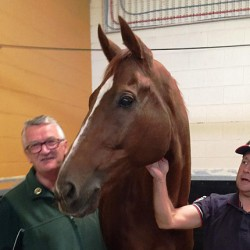 Cup hero Red Cadeaux to stay in Melbourne
