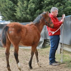 Ties that bind: A horse's first lesson in tying up