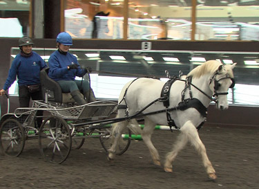 Rescue pony Yogi plays Scrooge in the the Santa vs Scrooge Celebrity Scurry Stakes, and will be driven by Liz Harcombe, with Fiona Powell the backstepper.