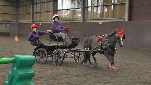 Saphire, pictured here in rehearsal with driver Amy Last, will be taking on the role of Santa on Friday at Olympia, with Pippa Funnell riding pillion.