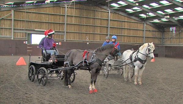 World Horse Welfare ponies Saphire and Yogi are preparing for their Olympia performances on Friday.