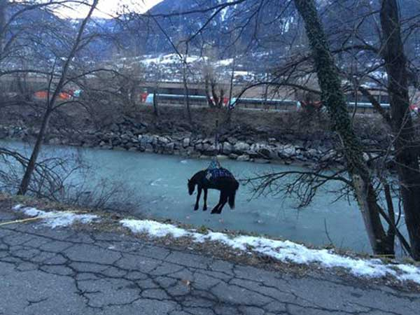 The horse is lifted clear of the river by a helicopter. Photos: Police Cantonale du Valais/Facebook