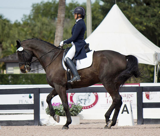Ann Romney and Donatello, who won an Intermediate II class at this month's Adequan Global Dressage Festival.