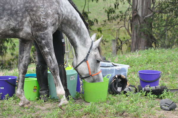 Image result for Horse eating Supplements
